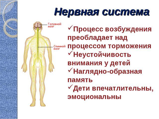 Нервная система Процесс возбуждения преобладает над процессом торможения Неус...