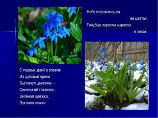 Небо отразилось на её цветах, Голубые заросли выросли в лесах. С первых дней