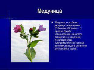 Медуница Медуница — особенно медуница лекарственная (Pulmonaria officinalis)