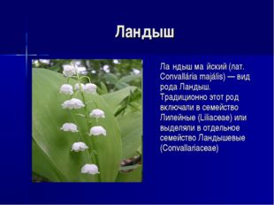 Ландыш Ла́ндыш ма́йский (лат. Convallária majális) — вид рода Ландыш. Традиц