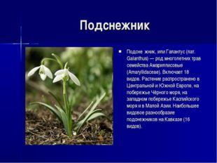 Подснежник Подсне́жник, или Галантус (лат. Galanthus) — род многолетних трав