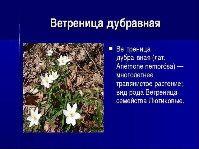 Ветреница дубравная Ве́треница дубра́вная (лат. Anémone nemorósa) — многолетн...