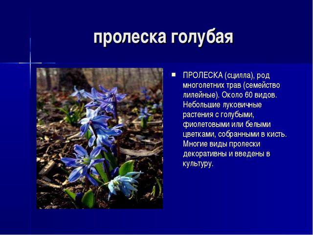 пролеска голубая ПРОЛЕСКА (сцилла), род многолетних трав (семейство лилейные)...