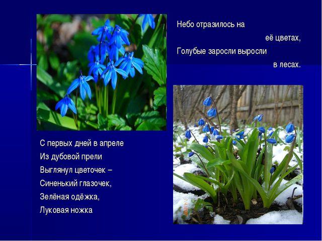Небо отразилось на её цветах, Голубые заросли выросли в лесах. С первых дней...