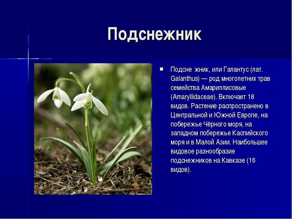 Подснежник Подсне́жник, или Галантус (лат. Galanthus) — род многолетних трав...