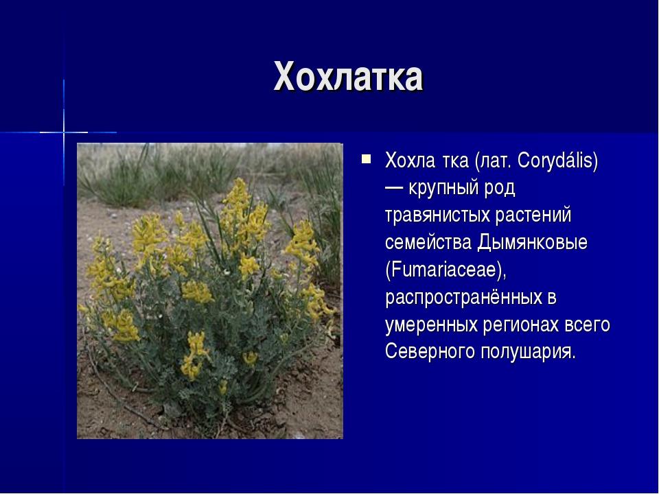 Хохлатка Хохла́тка (лат. Corydális) — крупный род травянистых растений семейс...