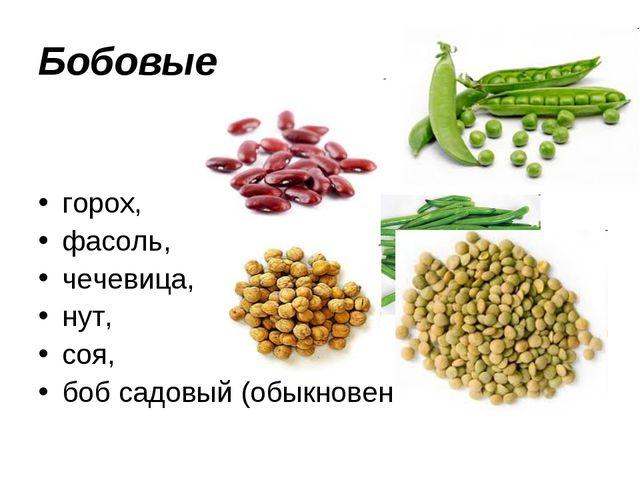 Бобовые горох, фасоль, чечевица, нут, соя, боб садовый (обыкновенный)