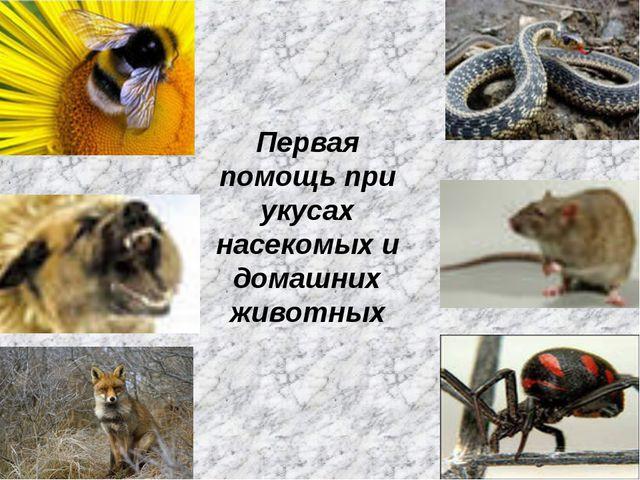 Первая помощь при укусах насекомых и домашних животных