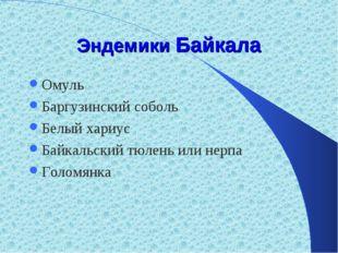 Эндемики Байкала Омуль Баргузинский соболь Белый хариус Байкальский тюлень ил