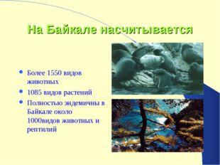 На Байкале насчитывается Более 1550 видов животных 1085 видов растений Полнос