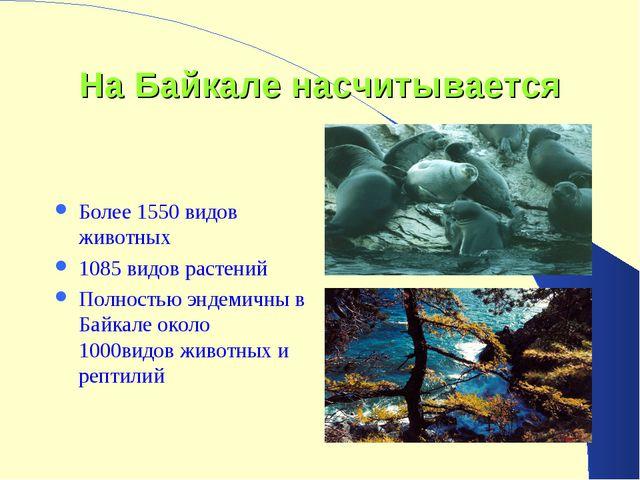 На Байкале насчитывается Более 1550 видов животных 1085 видов растений Полнос...