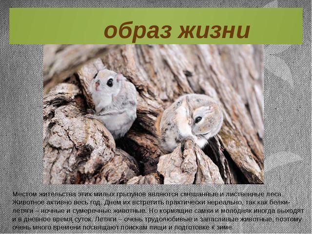 Местом жительства этих милых грызунов являются смешанные и лиственные леса. Ж...