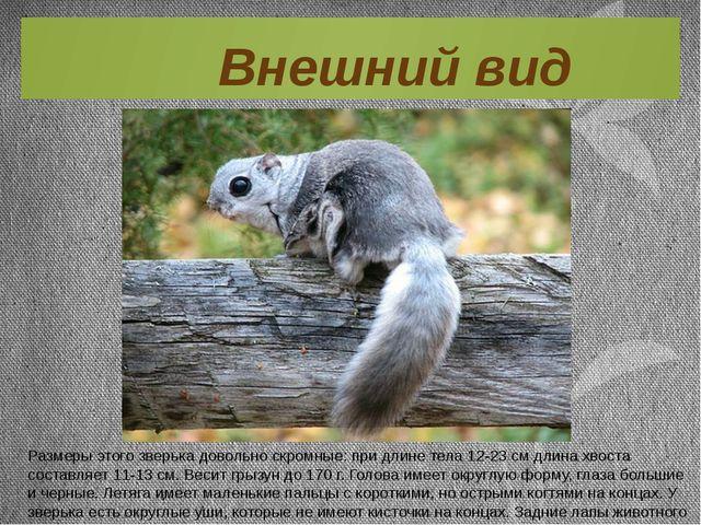 Размеры этого зверька довольно скромные: при длине тела 12-23 см длина хвоста...