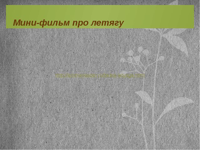 http://animalreader.ru/belka-letyaga.html Мини-фильм про летягу
