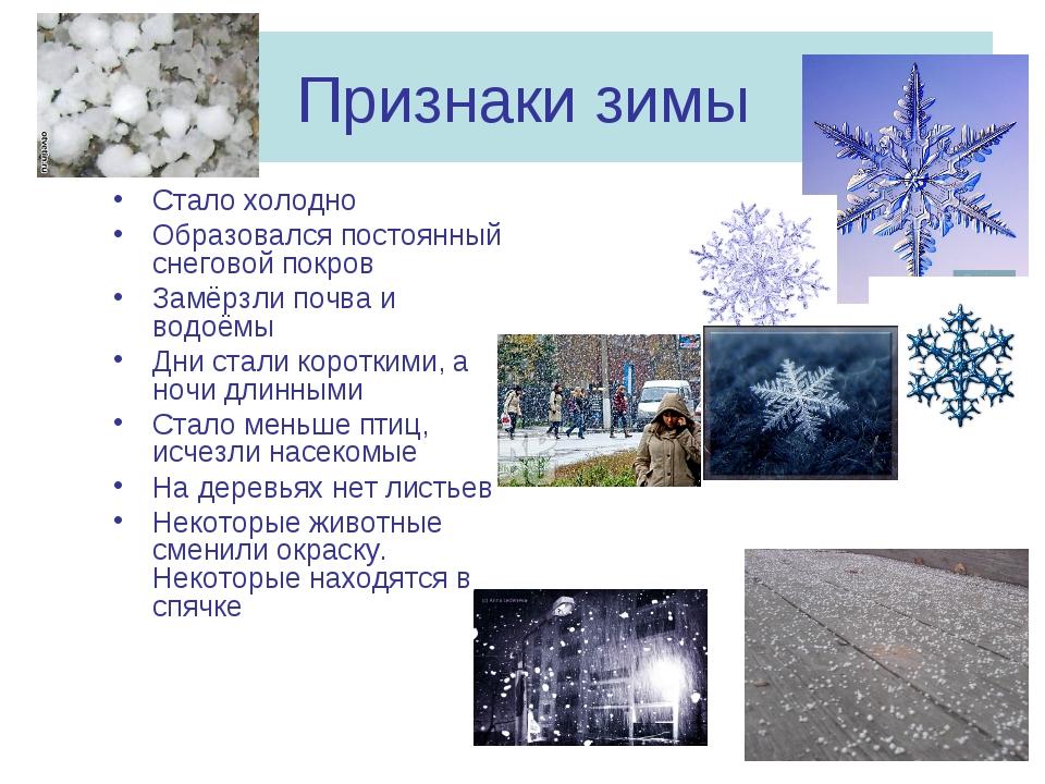 Признаки зимы Стало холодно Образовался постоянный снеговой покров Замёрзли п...