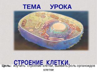 ТЕМА УРОКА СТРОЕНИЕ КЛЕТКИ, Цель: изучить строение клетки, выявить роль орган