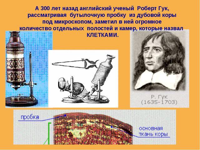 А 300 лет назад английский ученый Роберт Гук, рассматривая бутылочную пробку...