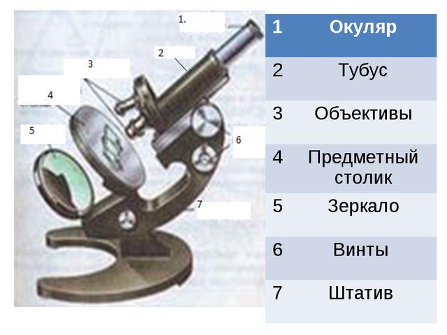 1Окуляр 2Тубус 3Объективы 4Предметный столик 5Зеркало 6Винты 7Штатив