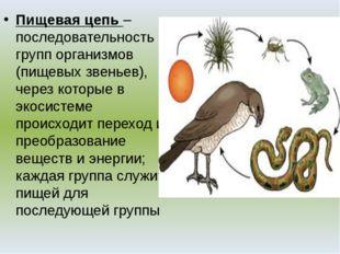 Пищевая цепь – последовательность групп организмов (пищевых звеньев), через к