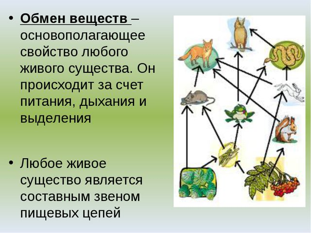 Обмен веществ – основополагающее свойство любого живого существа. Он происход...