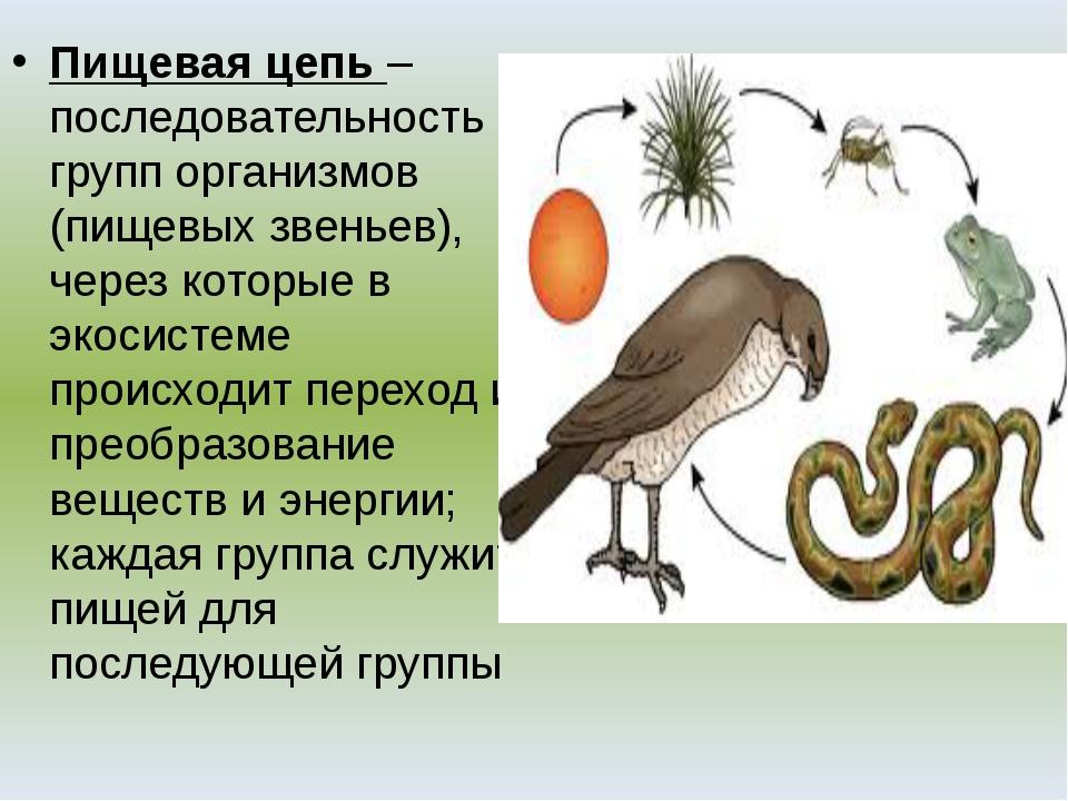 Пищевая цепь – последовательность групп организмов (пищевых звеньев), через к...