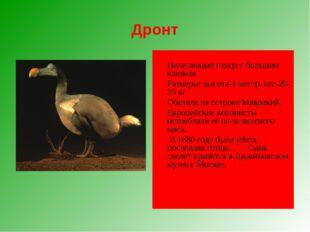 Дронт  Нелетающая птица с большим клювом Размеры: высота-1 местр, вес-20-2