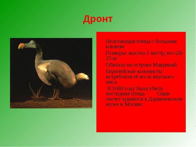 Дронт  Нелетающая птица с большим клювом Размеры: высота-1 местр, вес-20-2...