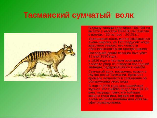 Тасманский сумчатый волк В длину тилацин достигал 100-130 см, вместе с хвост...