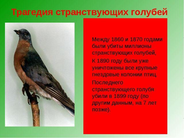 Трагедия странствующих голубей Чуть более ста лет назад в Северной Америке эт...