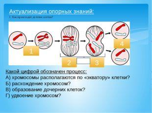 Актуализация опорных знаний: 1. Как происходит деление клетки? 1 2 4 Какой ци