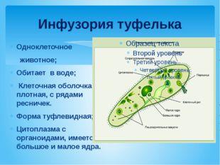 Инфузория туфелька Одноклеточное животное; Обитает в воде; Клеточная оболочка