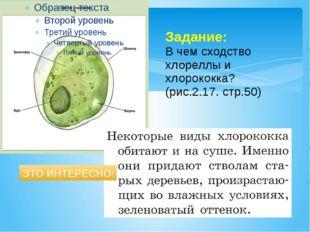 Задание: В чем сходство хлореллы и хлорококка? (рис.2.17. стр.50) ЭТО ИНТЕРЕС