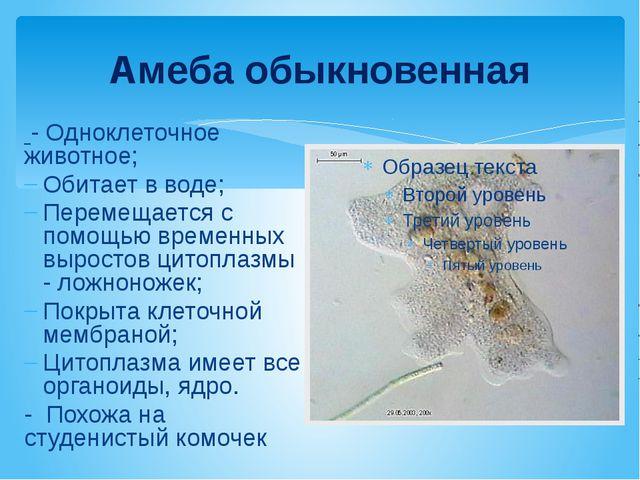 Амеба обыкновенная - Одноклеточное животное; Обитает в воде; Перемещается с п...