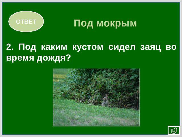 ОТВЕТ 2. Под каким кустом сидел заяц во время дождя? Под мокрым