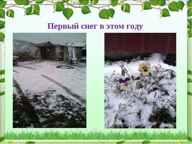 Первый снег в этом году