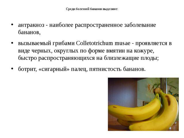 Среди болезней бананов выделяют: антракноз - наиболее распространенное заболе...