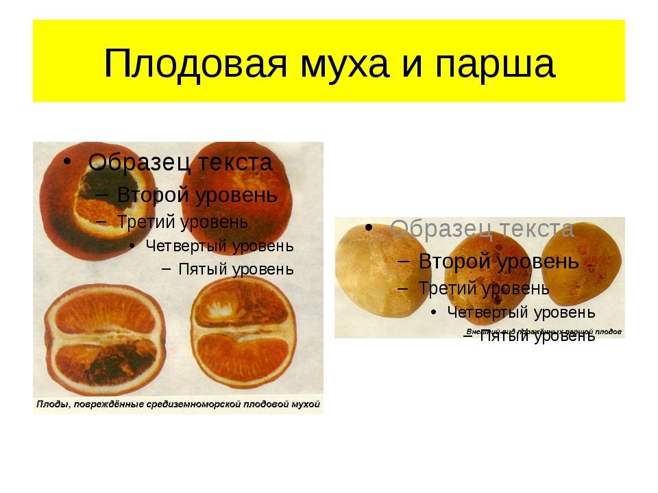 Плодовая муха и парша