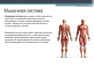 Мышечная система Строение скелетных мышц: 1 - Схема строения мышечного волокн