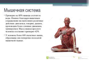 Мышечная система Основа мышц - белки, составляющие 80-85% мышечной ткани. Гла