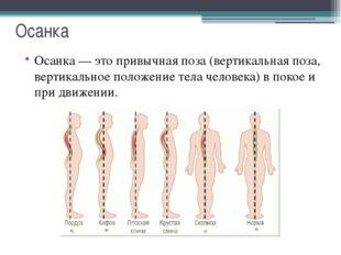 Осанка Типы осанки: Первый, основной тип. Физиологические изгибы позвоночника