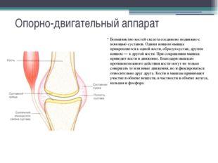Опорно-двигательный аппарат Большинство костей скелета соединено подвижно с п