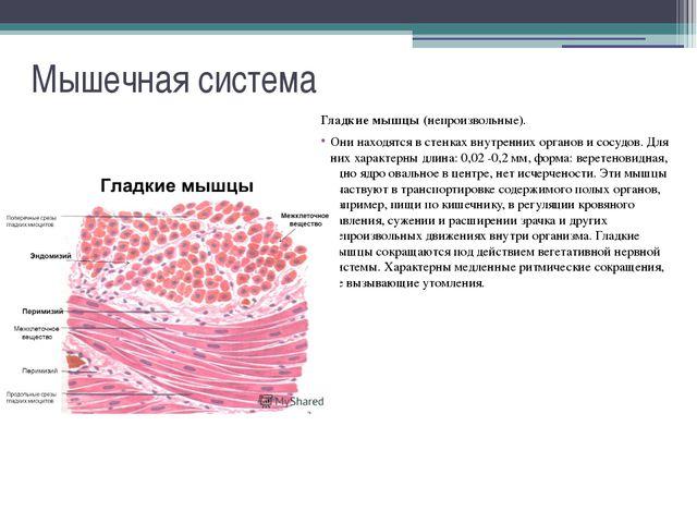 Мышечная система Сердечная мышца. Она имеется только в сердце. Эта мышца неут...