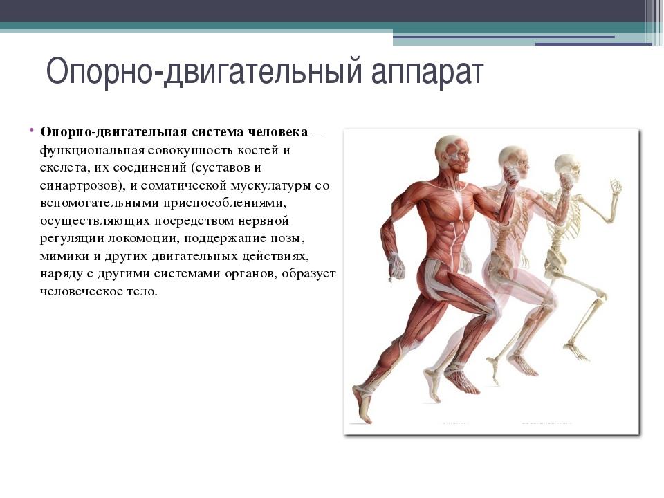 Осанка Осанка — это привычная поза (вертикальная поза, вертикальное положение...