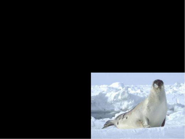 These mammals are well adapted to live in the water for a good portion of th...
