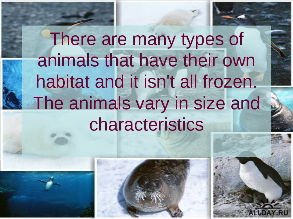 There are many types of animals that have their own habitat and it isn't all...