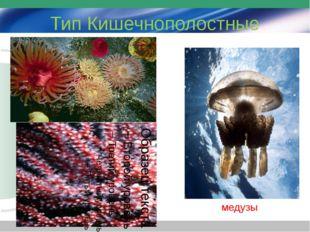 Тип Кишечнополостные медузы
