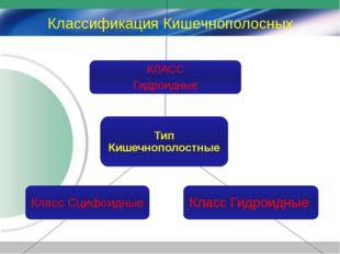 Классификация Кишечнополосных