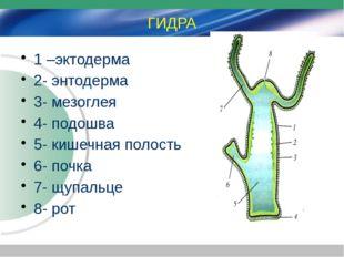 ГИДРА 1 –эктодерма 2- энтодерма 3- мезоглея 4- подошва 5- кишечная полость 6-