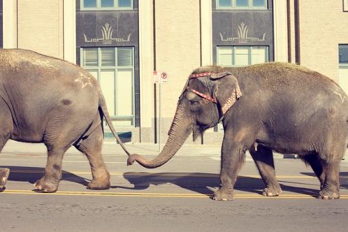 Забавные слоники