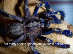 For many people spiders are favourite animals.